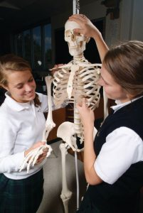 3B Scientific - Educational Anatomy Models