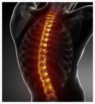 The Benefits of Models and Simulators in the Spine Industry