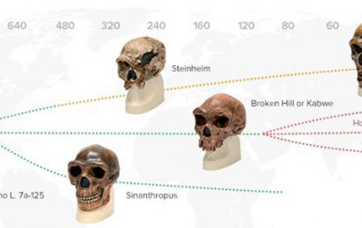 How Will Humans Evolve During the Anthropocene?
