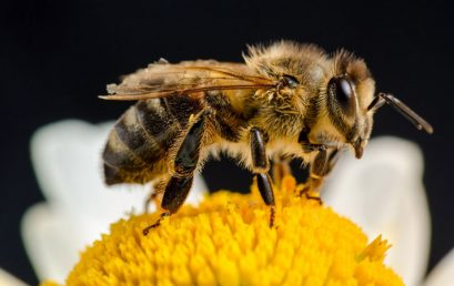 Are Bees Really Essential for Human Survival?