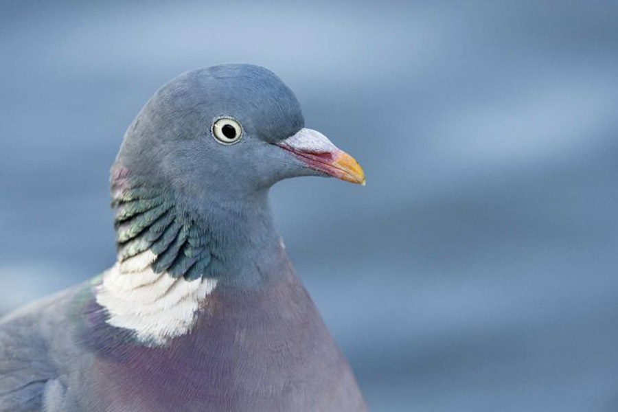 Nature's Navigators – How do Pigeons, Sharks and Bees Find Their Way Home?