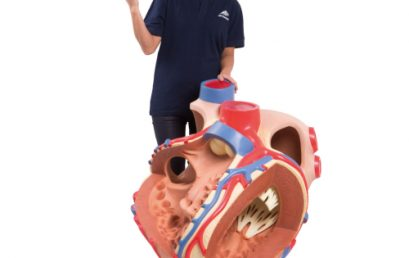 Cardiac Arrest vs Heart Attack – What's the Difference?