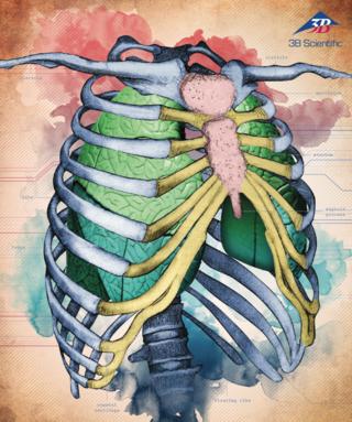 3B Scientific Medical Catalog