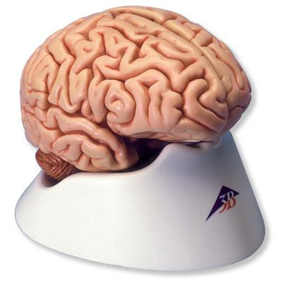PP-C18_01_Classic-Brain-5-part