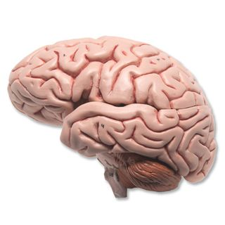 C18_03_Classic-Brain-5-part