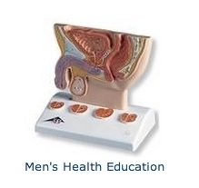 Men's Health Education